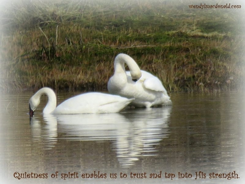 Quietness of spirit enables us to trust tap into His strength. ~wlm, Photo credit: Wendy MacDonald