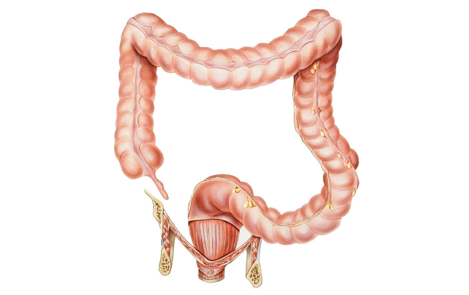 Appendix and colon illustration: ID 55917625 © Medicalartinc | Dreamstime.com