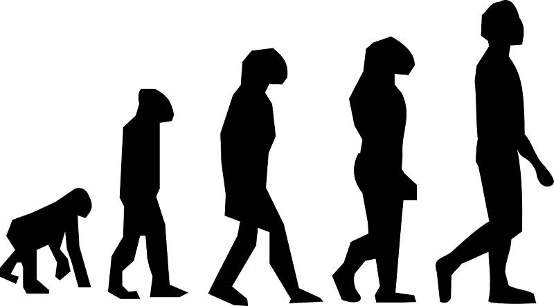 Silhouette progression of human evolution
