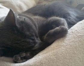 Black cat sleeping on a blanket, photo credit: Circe Denyer