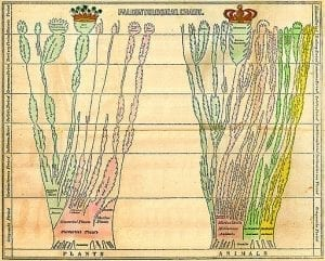 Edward Hitchcock two trees of life chart