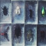 Collection of Insects under glass: ID 113819616 © Gorlov | Dreamstime.com