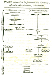 Lamarck's chart showing progression and relationship of animal life 1815