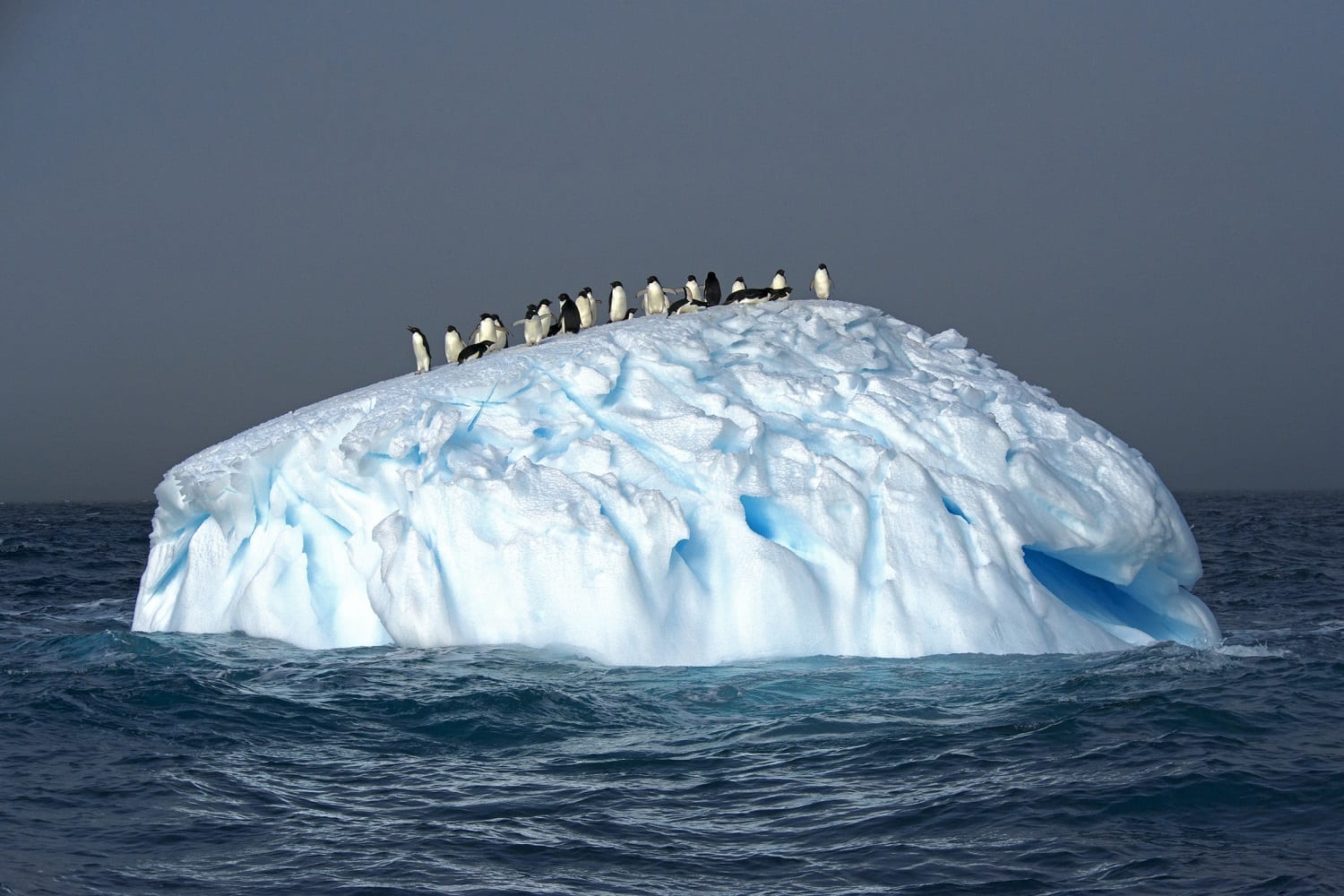 Adelie Penguins on an Iceberg: ID 62125837 © Jonathan R. Green | Dreamstime.com