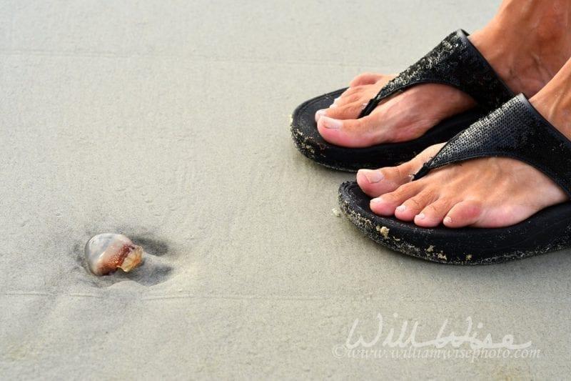 Beached Jellyfish near sandaled feet