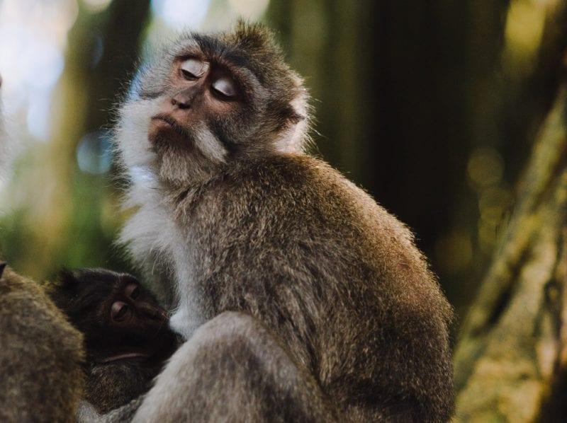 Monkey with closed eyes: Photo by Eirik Skarstein Unsplash