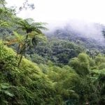 Rainforest in the mountain mist
