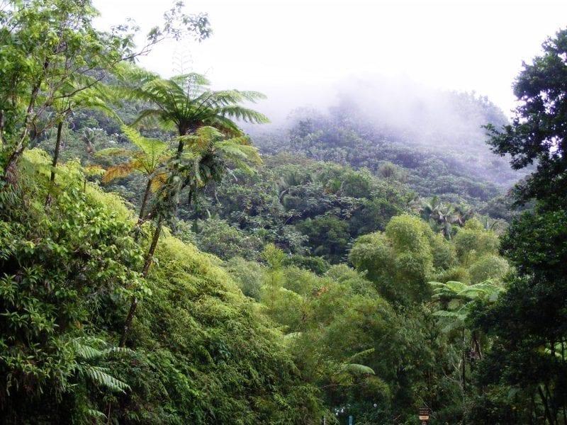 Rainforest in the mountain mist