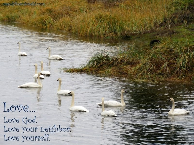 Love God, others, yourself, with swans swimming, photo credit: Wendy MacDonald