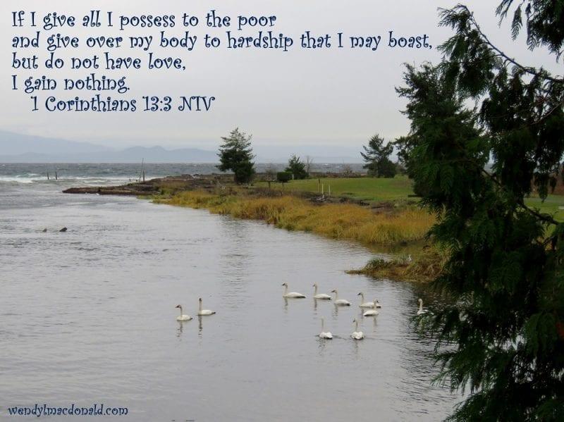 1 Corinthians 13:3 with swans swimming, photo credit: Wendy MacDonald