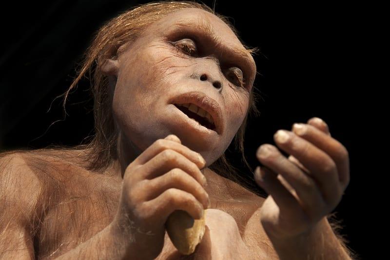 Australopithecus: ID 120911811 © Procyab  Dreamstime.com