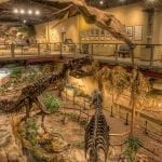 Glendive Dinosaur Museum main hall, photo credit: Tommy Lohman