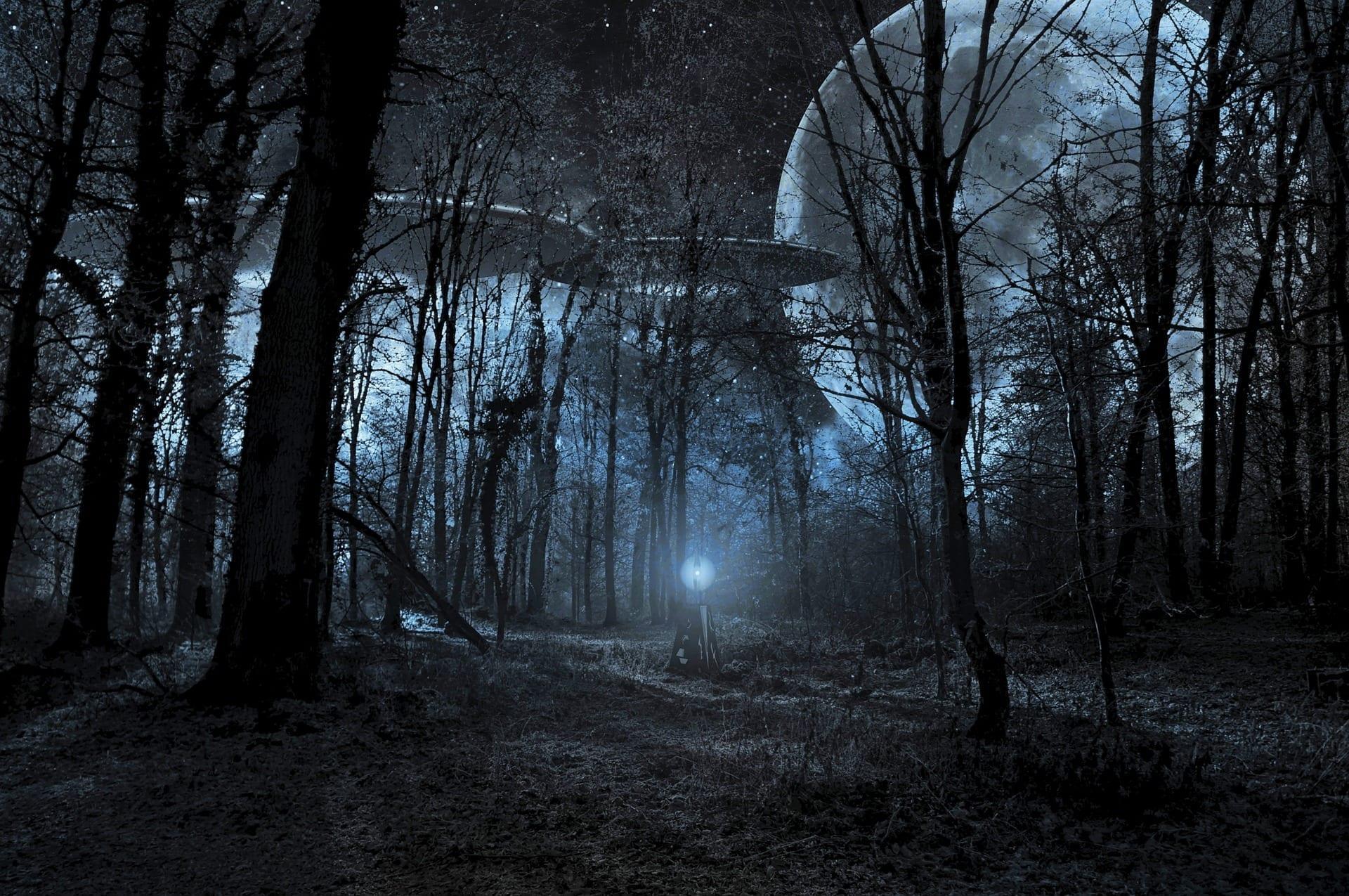 UFO? by moonlight through tree shadows
