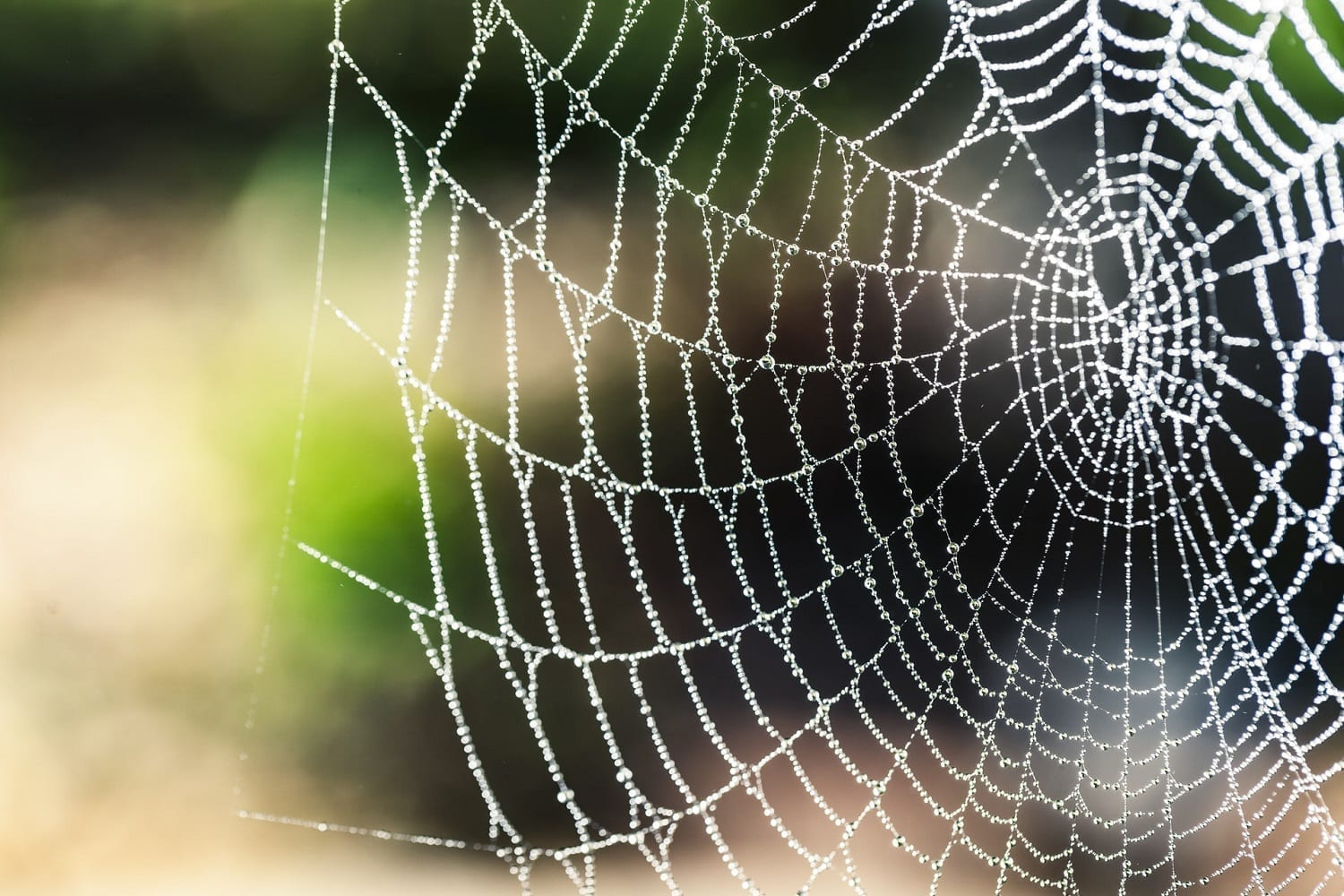 Spider web sprinkled with dew, photo credit: pexels