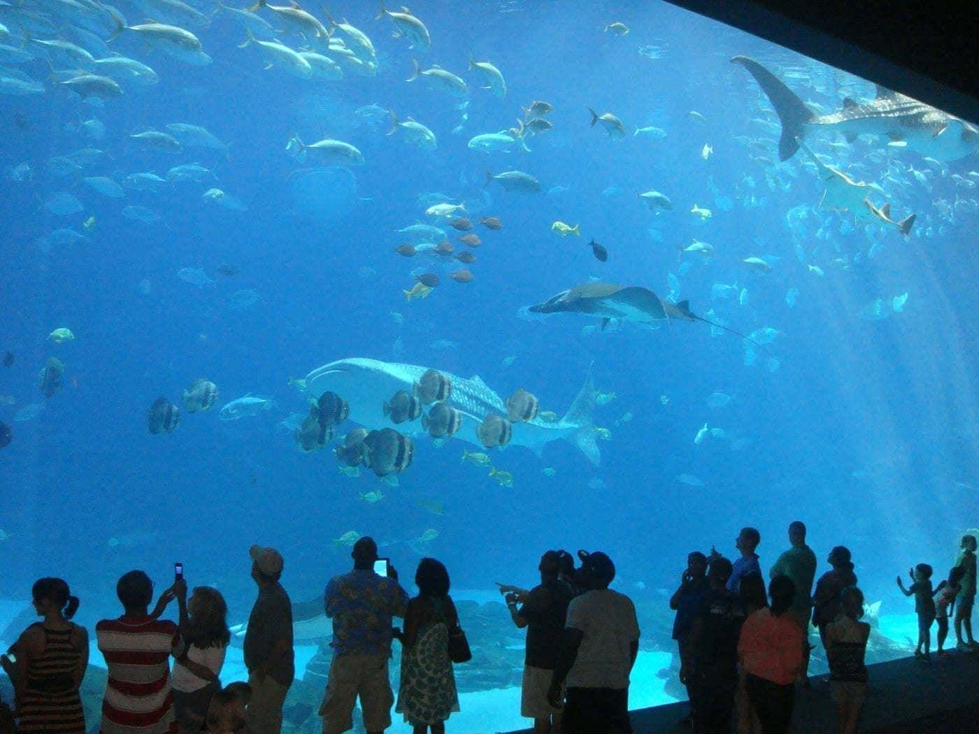 Georgia Aquarium large tank submerged viewing area
