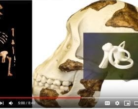 Lucy's features Genesis Apologetics YouTube still
