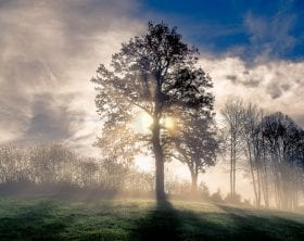 Foggy morning with the sunrise behind a tree