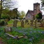 Churchyard tombstones with grape hyacinths: photo credit: pxhere