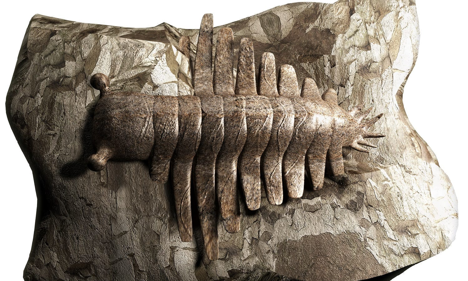 anomalocaris fossil, photo credit: dreamstime_38224357