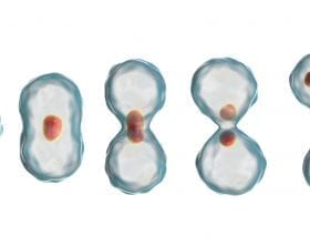 CG Cells dividing in mitosis: ID 98510173 © Katerynakon | Dreamstime.com