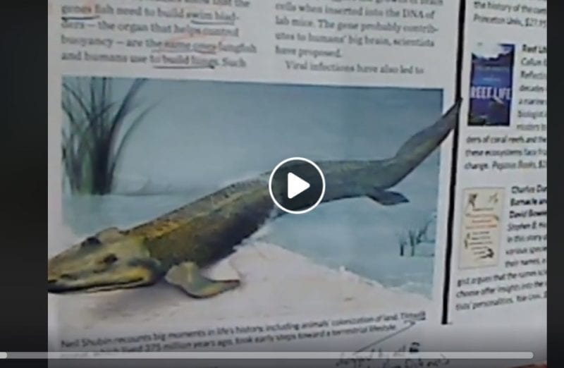 Dr Jackson fish evolution video still