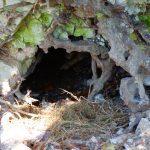 Modern Badger's den (roughly the same size): Photo 143690181 / Badger © Ivanmattioli | Dreamstime.com