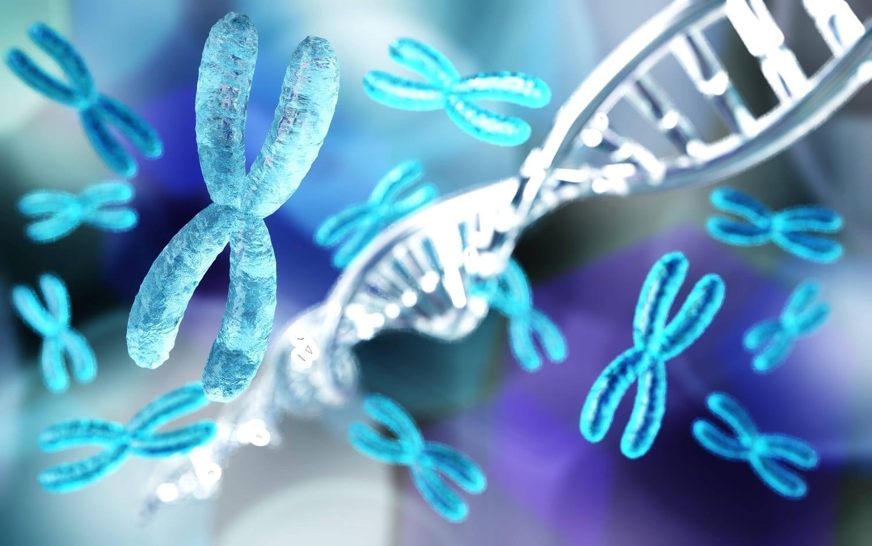 Chromosomes and DNA spirals: ID 141572715 © Stanislav Rykunov | Dreamstime.com