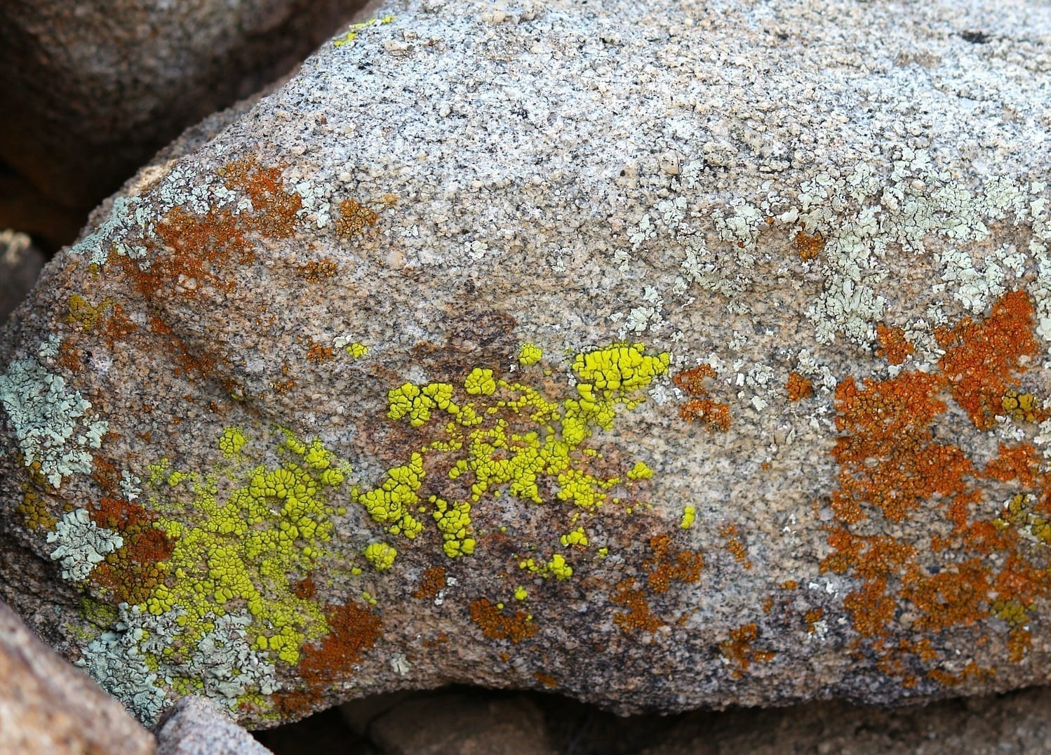 Green and brown lichen on a granite boulder, photo credit: Pixabay user: nightowl