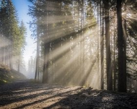 Light beams shining on mist in a forest, photo credit: Pxhere