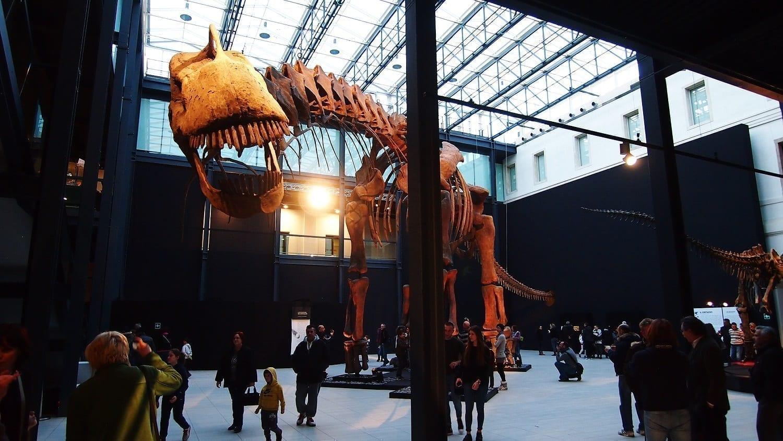 Argentinosaurus skeleton Italy: ID 83675110 © Andrea Mangoni | Dreamstime.com