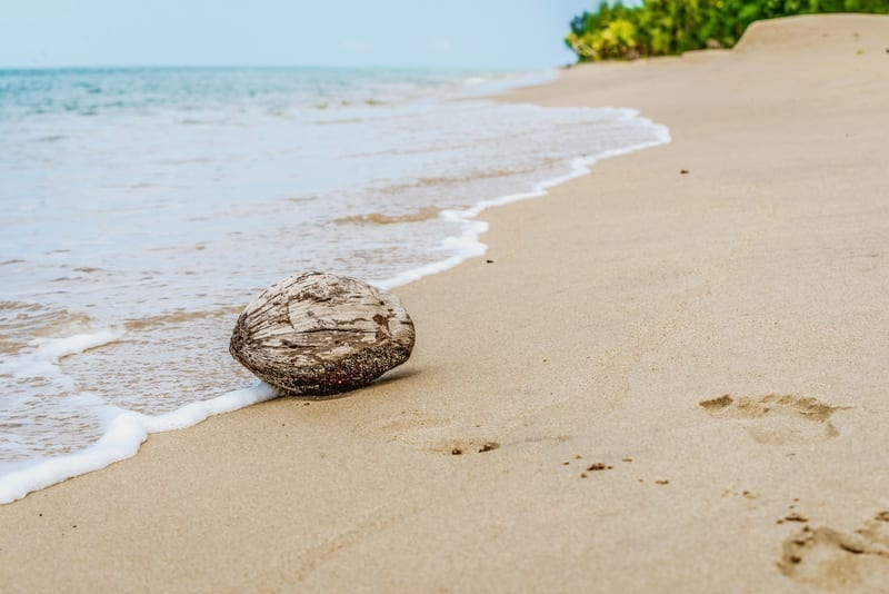 Coconut washed up on a beach: Photo 122797522 © Thomas Baur | Dreamstime.com