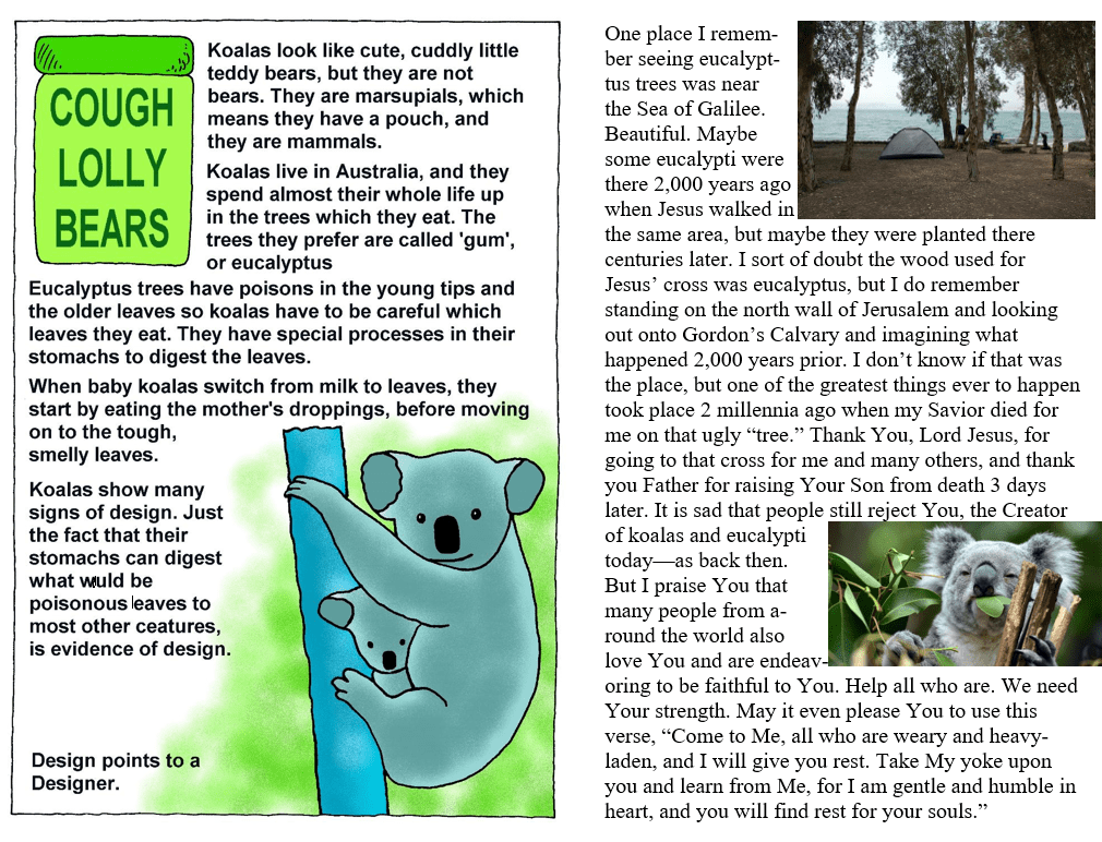 Koalas and eucalyptus trees meme