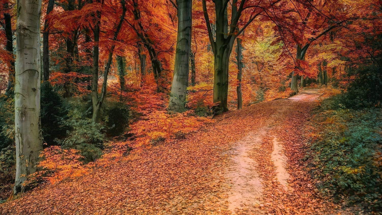 Autumn forest with leave covered path, photo credit: Johannes Plenio at Pexels