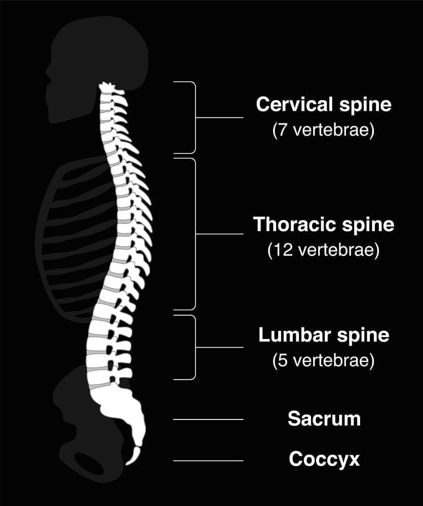 Human Spine: Illustration 59627083 © Peter Hermes Furian | Dreamstime.com