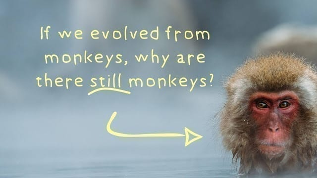 If we evolved from monkeys, cover photo