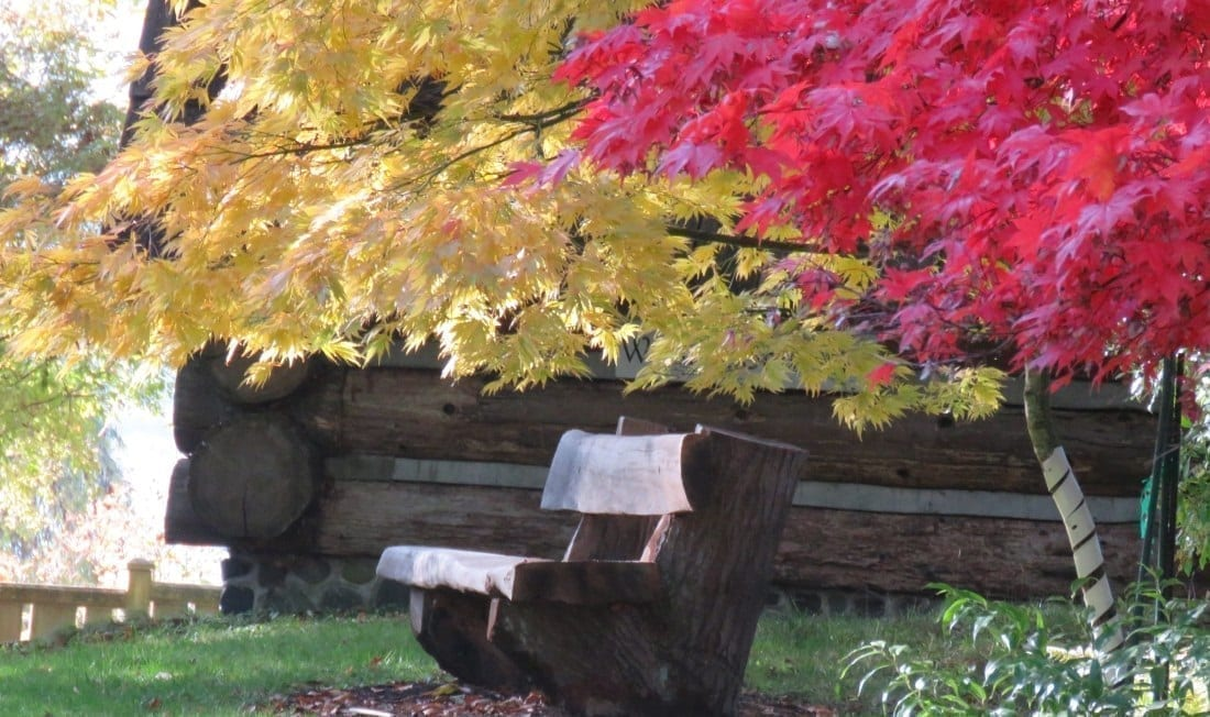 Hand carved bench under fall colored trees, photo credit: Wendy MacDonald