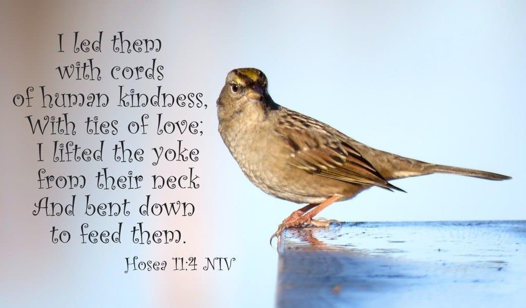 Sparrow closeup with Hosea 11:4, photo credit: Wendy MacDonald
