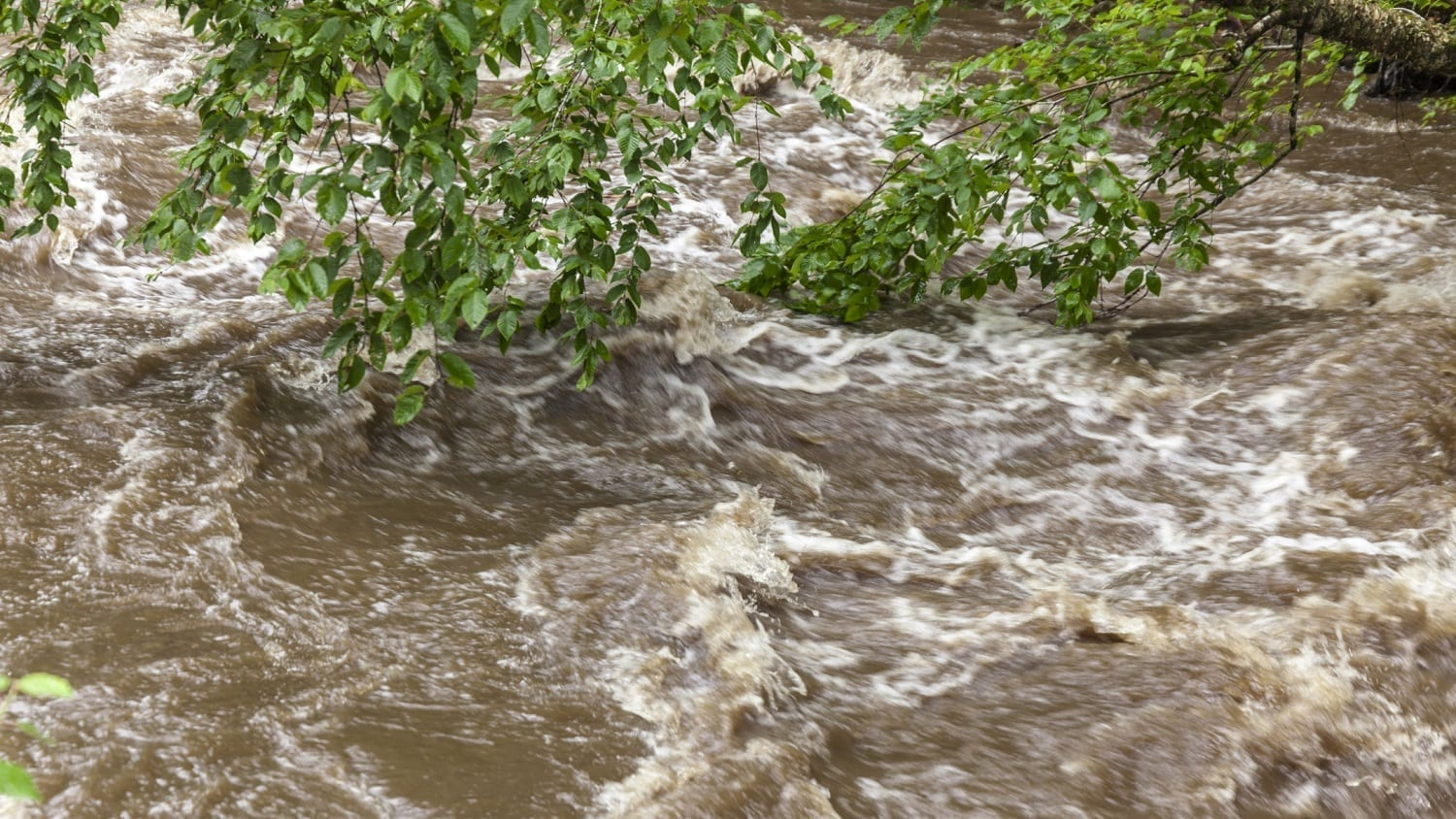 Flood waters swirling around a tree's branches: ID 126789221 © Mothy20 | Dreamstime.com