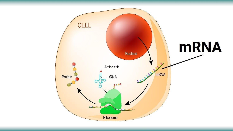 Cellular processes involving RNA: ID 138432885 © Designua | Dreamstime.com