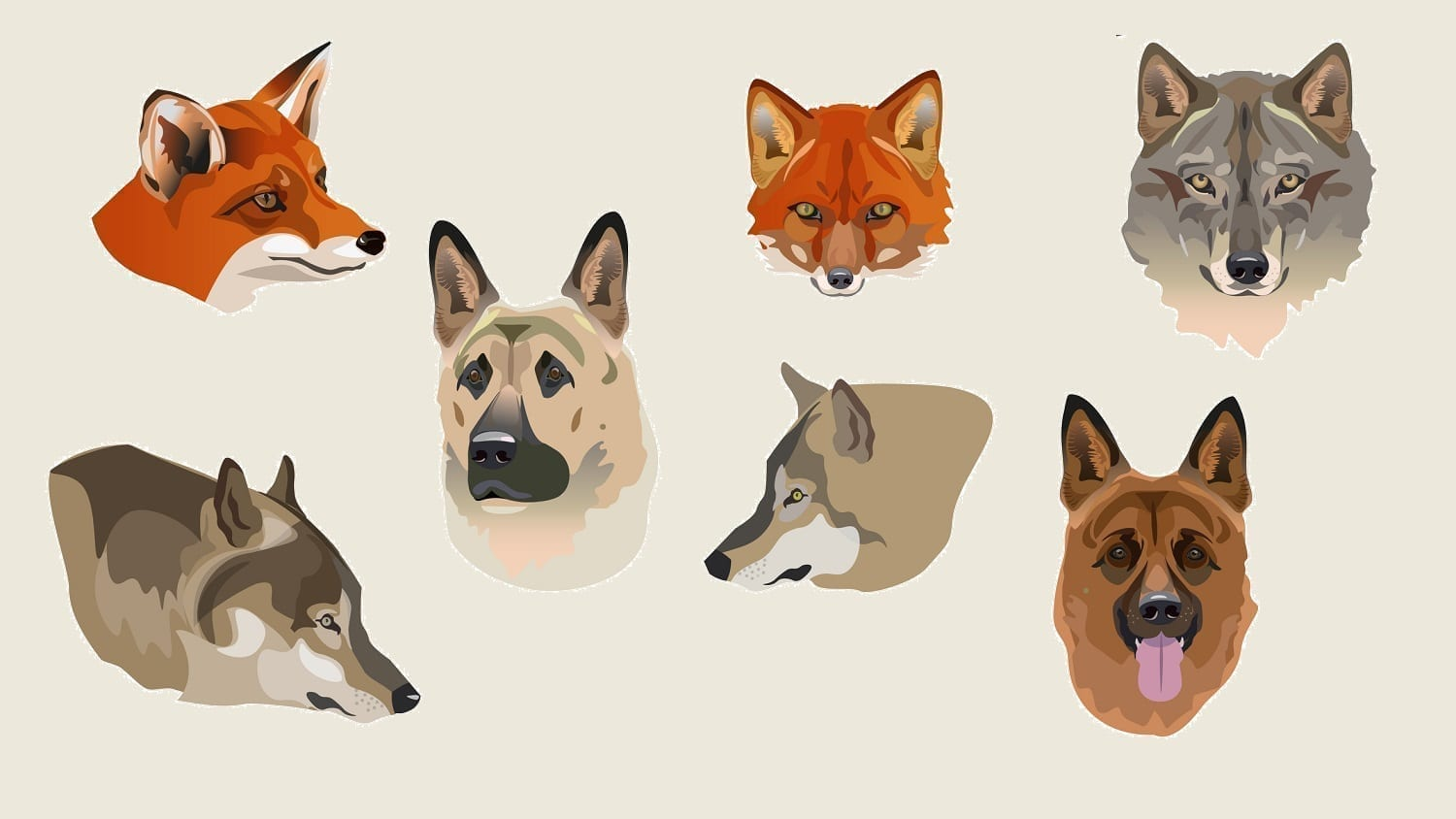 Artwork showing foxes, wolves, and dogs: Illustration 135375950 © Hhurzhi | Dreamstime.com