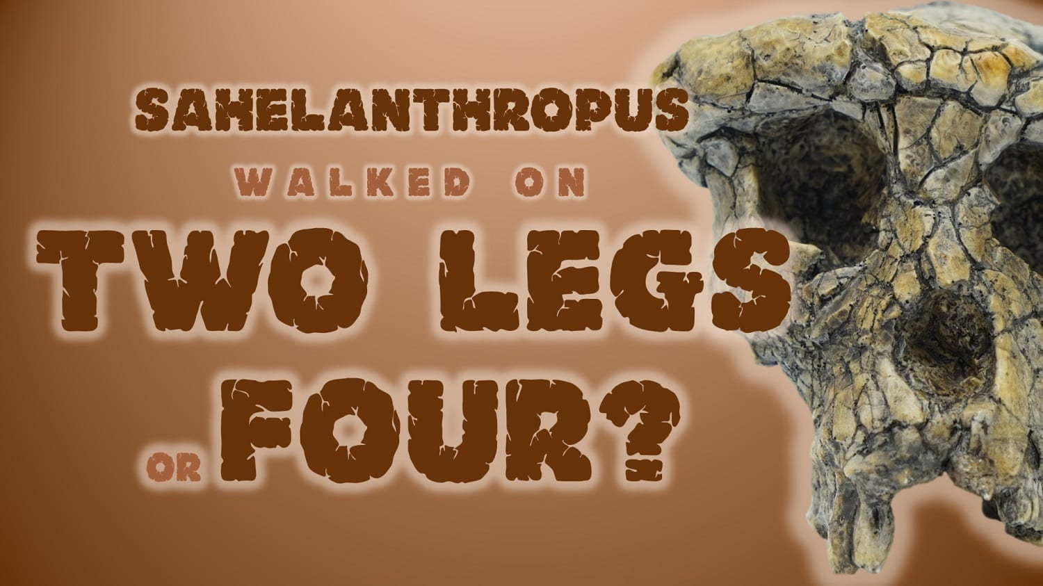 """Sahelanthropus walked on two legs or four?"""