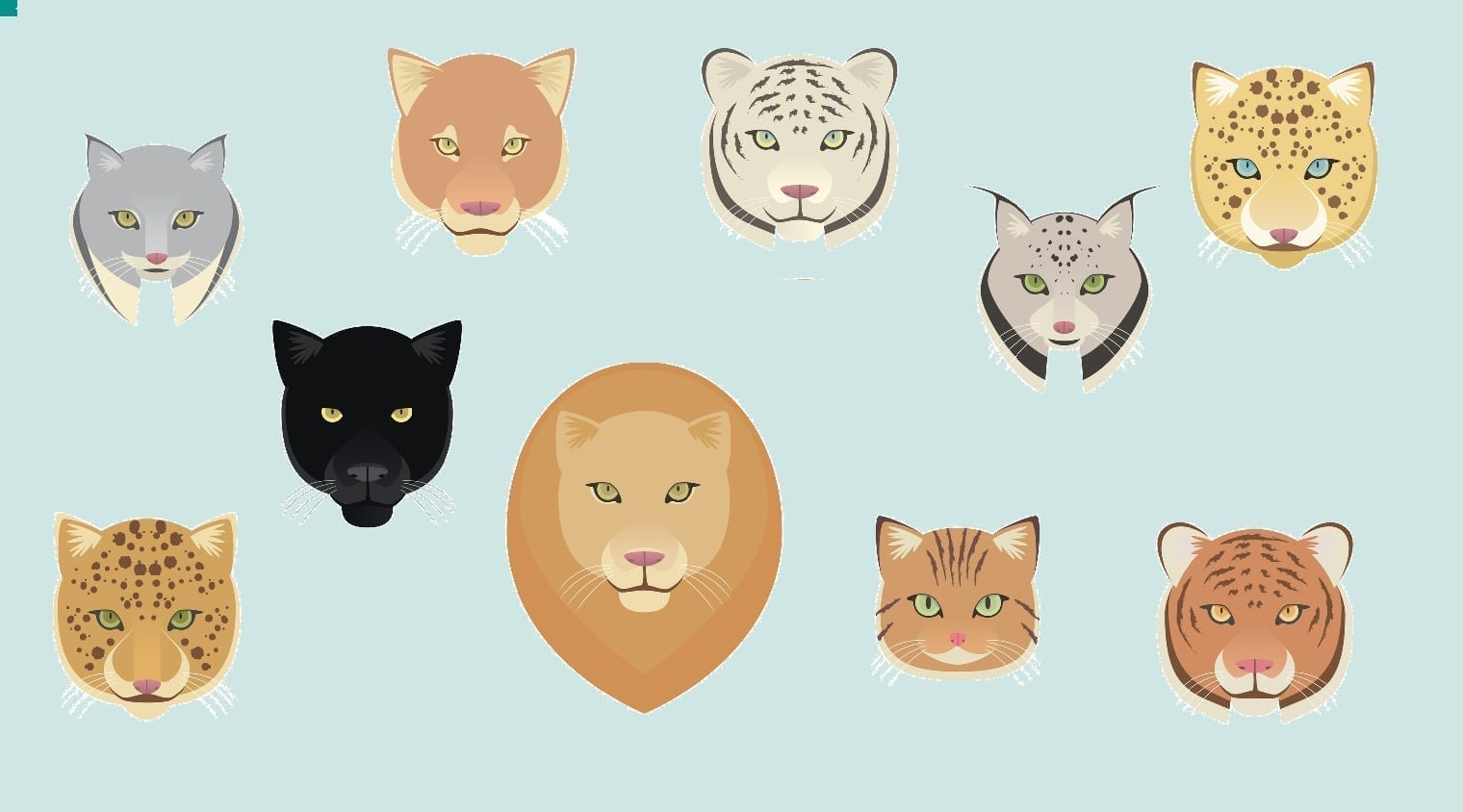 Various cat faces: Illustration 46721632 © Tomacco | Dreamstime.com