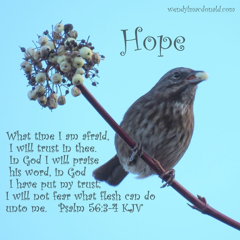 What time I am afraid, I will trust in thee. In God I will praise his word, in God I have put my trust; I will not fear what flesh can do unto me. Psalm 56:3-4