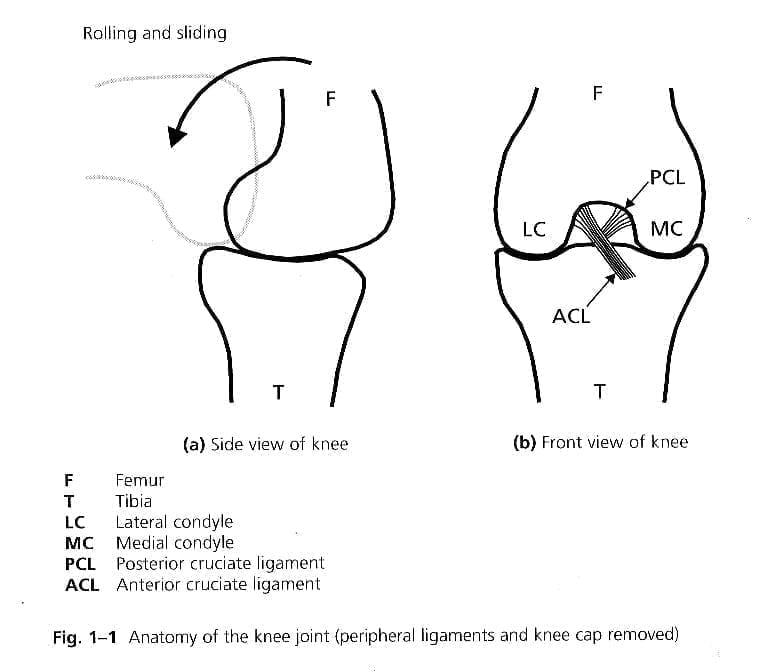 diagram of a knee joint flexing