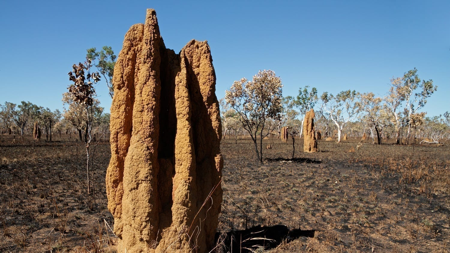 Cathedral Termite mount, Australia: Photo 15273994 © Ecophoto | Dreamstime.com