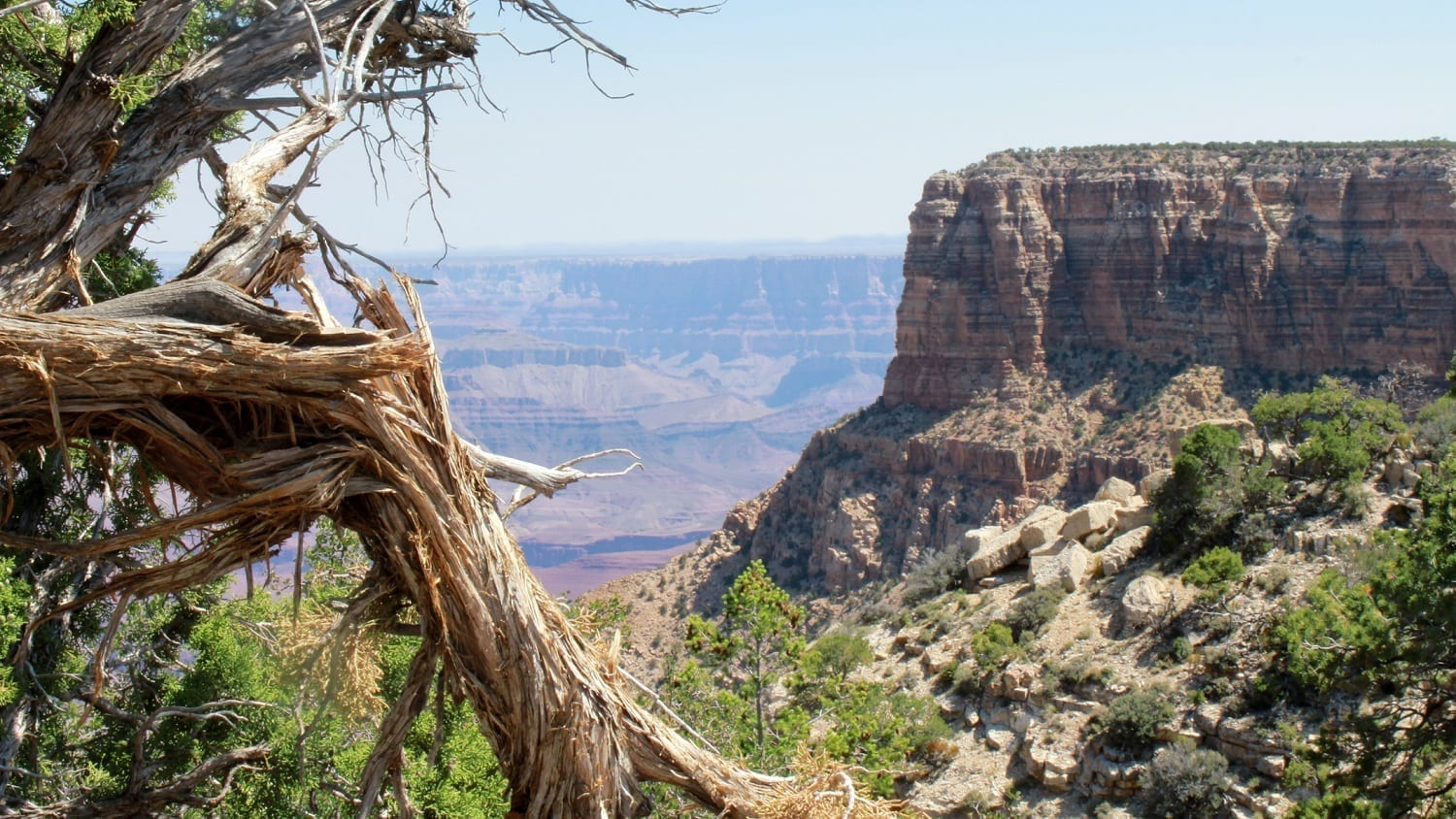Grand Canyon view with broken dead tree in foreground: Photo 27825853 © Gary Arbach | Dreamstime.com
