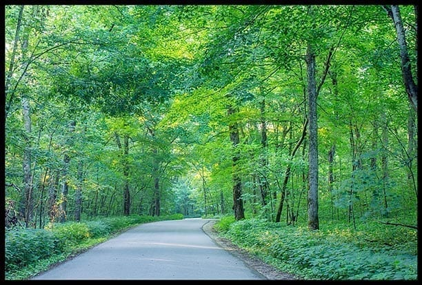 Road through leafy words, photo credit: Pat Mingarellie
