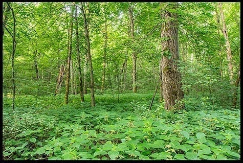 Ground cover under leafy trees, photo credit: Pat Mingarelli