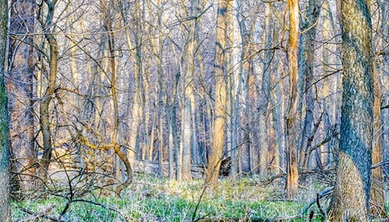 Woods in early spring, photo credit: Pat Mingarelli