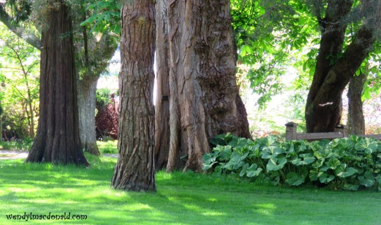Open woods in dappled sunlight, photo credit: Wendy MacDonald